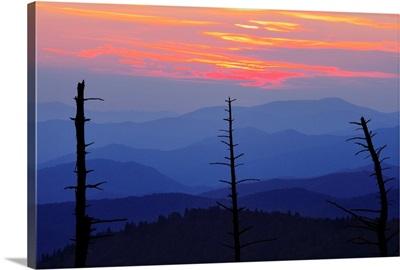 Dead Trees And Mountains, Smoky Mountains National Park, North Carolina, USA