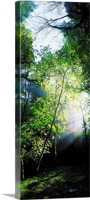 Deciduous Wood, Killarney National Park, County Kerry, Ireland