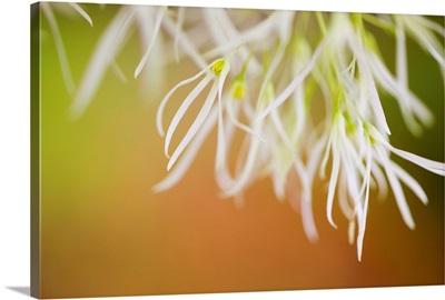 Delicate Petals