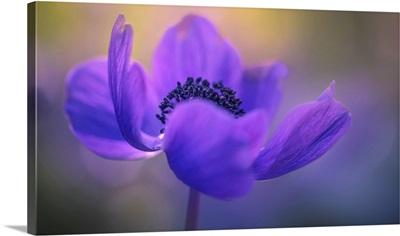 Delicate purple flower in bloom, Jerusalem, Israel