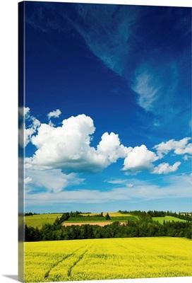 Dramatic Cumulus Clouds Over Canola Field, Prince Edward Island, Canada