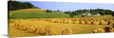 Dried wheat shocks in the field with a grain cornfield