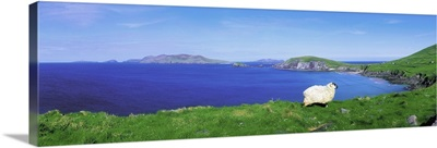Dunmore Head, Blasket Islands, Dingle Peninsula, Co Kerry, Ireland