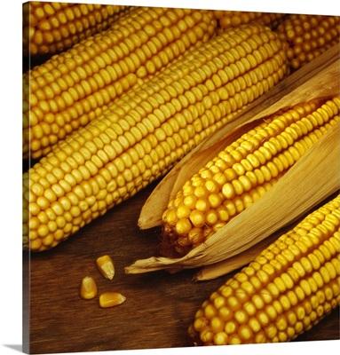Ears of mature harvested grain corn