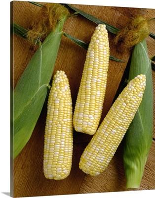 Ears of sweet bi-colored corn on rough cut wood
