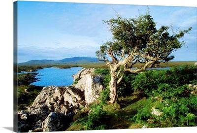 Errisbeg Mountain, Co Galway, Ireland