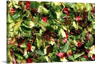 European blend salad mix consisting of Romaine, radicchio, carrot shreds