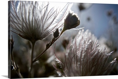 Extreme Close-Up Of Fuzzy White Flower