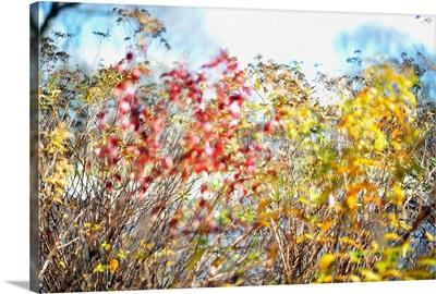 Fall colours in midtown Toronto, Ontario, Canada