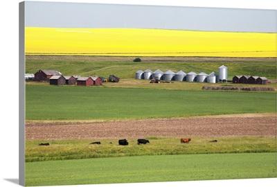 Farm Yard With Grain Bins, Alberta, Canada