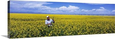 Farmer examining his crop in blooming canola field, South Central Colorado