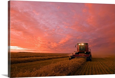 Farmer Harvesting Oat Crop With A Combine At Dusk, Manitoba, Canada
