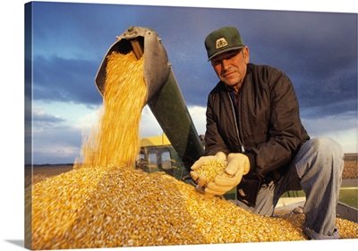 Farmer in a grain wagon holding grain corn while combine is augering