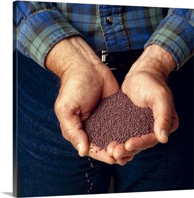 Farmer's hands holding broccoli seed