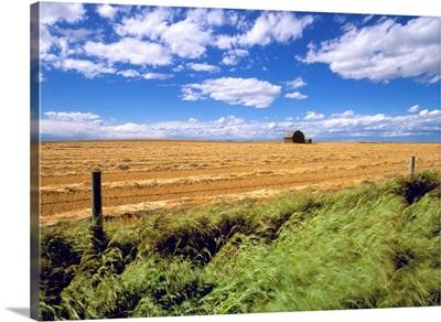 Farmland Near Cremona, Alberta, Canada