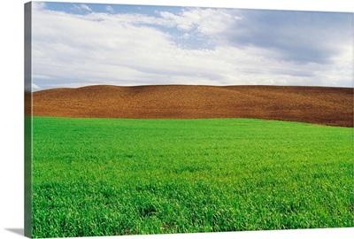 Farmland With Early Growth Manitoba, Canada