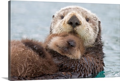 Female Sea otter holding newborn pup out of water, Prince William Sound