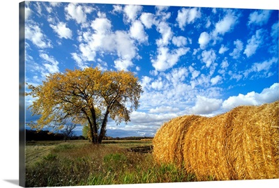Field And Straw Rolls, St. Adolphe, Manitoba, Canada