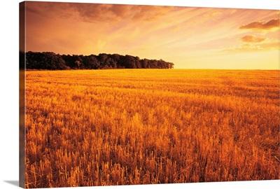 Field Of Grain Stubble Near St. Adolphe, Manitoba, Canada