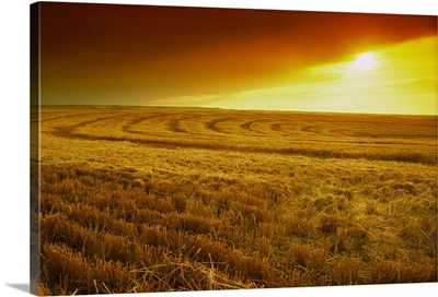Field of wheat stubble at sunset with a storm approaching, Nebraska