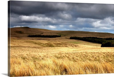 Field Of Wheat With Dark Clouds Overhead, Northumberland, England