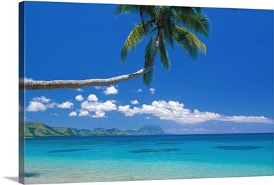 Fiji, Kadavu Island, Palm Tree Stretched Over Turquoise Coastline