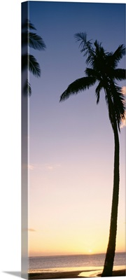 Fiji, Palm Trees Silhouetted On Beach At Sunset