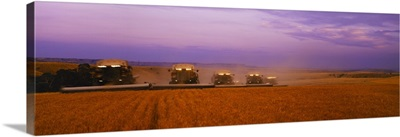 Five Gleaner combines harvest wheat in tandem at dusk, Eastern Montana