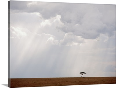 Flat-Topped Acacia Tree Beneath Stormy Skies; Kenya