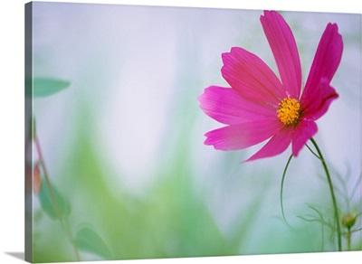 Flower In Garden, Alberta, Canada