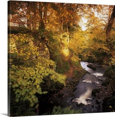 Flowing Water Through A Forest, Glenarm, County Antrim, Northern Ireland
