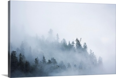 Fog shrouded trees along the British Columbia coastline near Prince Rupert, Canada