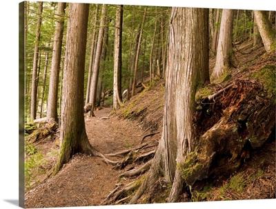 Forest Pathway, Whistler, British Columbia