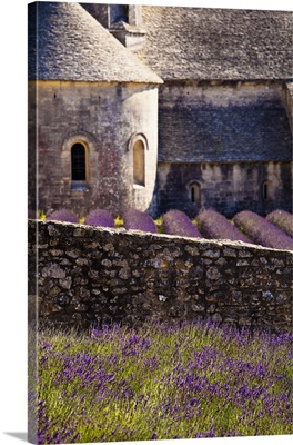 France, Provence-Alpes-Cote d'Azur, field of Lavender in front of Senanque Abbey