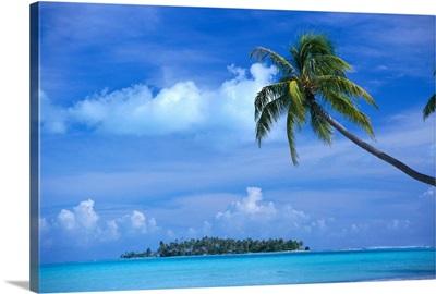 French Polynesia, Bora Bora, Coastal Scene Palm In Foreground, Calm Ocean
