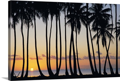 French Polynesia, Huahine, Tropical Sunset With Silhouetted Palm Trees