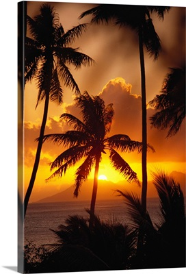 French Polynesia, Tahiti, Palm Trees Silhouetted By A Vibrant Sunset