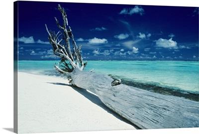 French Polynesia, Tetiaroa (Marlon Brando's Island), Driftwood On White Sand Beach