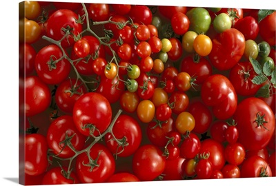 Fresh market, hothouse and cherry tomatoes