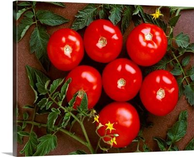 Fresh market tomatoes on a dark brown background