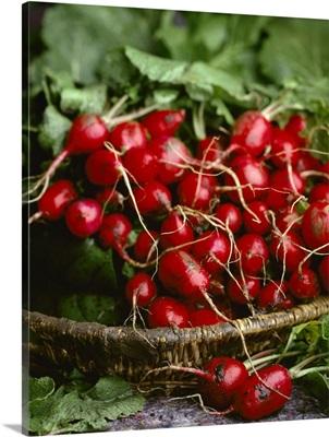 Freshly harvested radishes in a basket