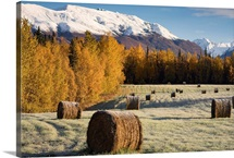 Frost clings to bails of hay in a field near Palmer, Alaska on an early Autumn morning