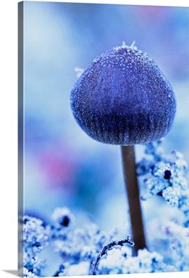 Frost Covered Mushroom, North Canol Road, Yukon, Canada