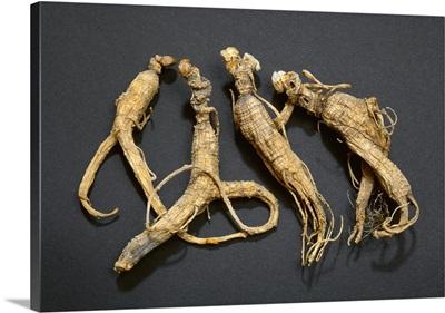 Ginseng root, dried (Panax quinquefolius)