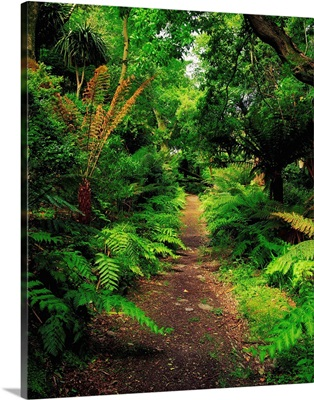 Glanleam, Co Kerry, Ireland; Pathway Lined By Tree Ferns