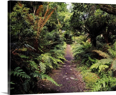 Glanleam, Ireland, Path In The Woods At A Country House