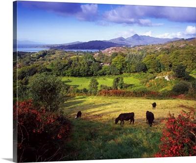 Glengarriff, Beara Peninsula, County Cork, Ireland