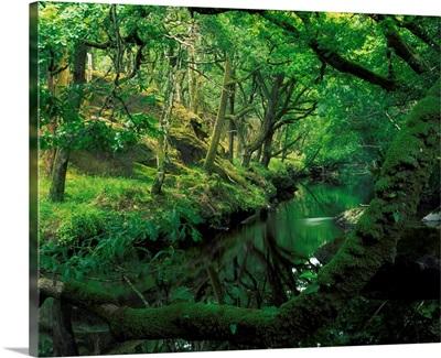 Glengarriff River, County Cork, Ireland; River Through The Woods