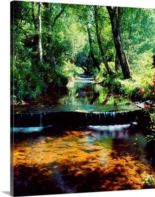 Glenleigh Gardens, Co Tipperary, Ireland; Stream Through Woods