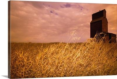 Grain Elevator And Crop